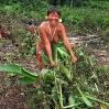 Roxana extrae de la tierra plantas y raíces tenazmente arraigadas.