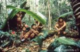 The Yanomami live in harmony with nature
